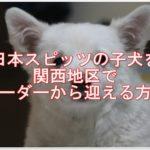 日本スピッツの子犬を関西地区でブリーダーから迎える方法!!