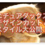 ミニチュアダックスのデザインカット☆おしゃれスタイルは?!