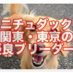 ミニチュアダックスの優良ブリーダー☆関東は東京からご紹介