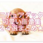 ミニチュアダックスフンドの可愛い画像集♪まとめ24選です★