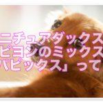 ミニチュアダックスとパピヨンのミックス!パピックスの紹介!