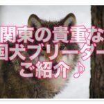 超貴重!!四国犬のブリーダーを関東で発見!四国犬の魅力とは?