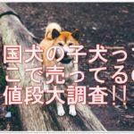 四国犬の子犬ってどこで売ってるの?!入手方法と値段大調査