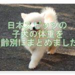 フワフワの日本スピッツ♪子犬の時期の体重を月齢別に調査!!