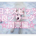 日本スピッツの優良ブリーダー関東編!!スピッツを広めよう!!