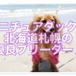 ミニチュアダックスの優良ブリーダー♪札幌・北海道特集編♪