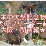 日本の天然記念物!!甲斐犬のブリーダー紹介!!大阪・関西編★