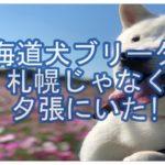 北海道犬のブリーダー☆北海道の札幌じゃなくて夕張にいた!!