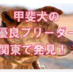 珍しい甲斐犬を扱うベテラン優良ブリーダー!関東でみつけた!