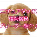 ミニチュアダックス優良ブリーダー♪福岡で良犬に出会おう!!