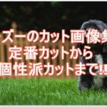 シーズーのカットスタイル画像集☆定番カットと個性派カット