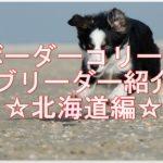素敵なボーダーコリーの☆優良ブリーダー☆北海道で大捜索!!