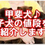 ★珍しい犬種の甲斐犬★気になる子犬の値段をご紹介します!!