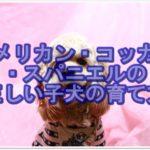 正しいアメリカン・コッカー・スパニエルの子犬の育て方★☆