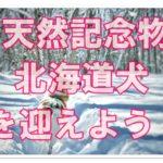 天然記念物!北海道犬の仔犬は販売されているの?お迎えの方法