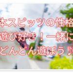 日本スピッツの性格★遊び好きなのでどんどん一緒に遊ぼう♪