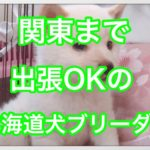 北海道犬の関東ブリーダーはいない⁇子犬の販売価格も紹介☆