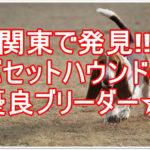 バセットハウンド優良ブリーダー☆関東で探している方必見!!