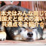 日本犬はみんな同じ??四国犬と柴犬の違いや共通点をご紹介☆