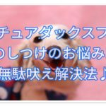 ミニチュアダックスフンドのしつけ☆無駄吠えの止め方とは!?