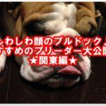 しわしわ顔が可愛い♪ブルドックのブリーダー大公開!!関東編