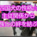 四国犬の子犬のしつけ方☆性格を理解して主従関係へ導こう!!