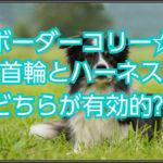 ボーダーコリーのおすすめハーネス☆どちらが有効的なのか??