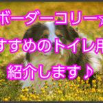 ボーダーコリーのトイレのサイズ☆おすすめトイレ用品紹介!!