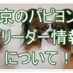 パピヨンのブリーダー東京!!優良ブリーダーさんを発見!!★☆
