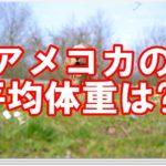 ☆アメリカンコッカースパニエル☆平均体重をご紹介します!!