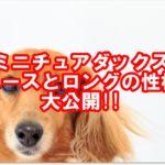 ミニチュアダックス☆スムースとロングの性格と特徴を大公開