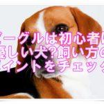ビーグルは初心者に優しい犬?飼い方のポイントを要チェック!