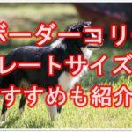 ボーダーコリーのクレートサイズ☆おすすめクレートも紹介!!