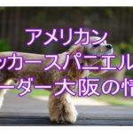 アメリカンコッカースパニエルのブリーダーを大阪で探そう☆