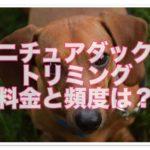 ミニチュアダックス★トリミングの料金と最適な頻度を解説!!