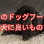 今あげているドッグフードは愛犬の体を考えて選んでいますか?