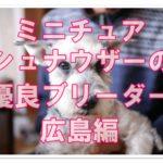 ミニチュアシュナウザーのおすすめブリーダー!!広島で発見☆
