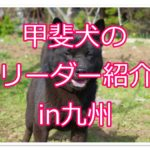 甲斐犬の優良ブリーダーさんを紹介♪九州でも出会えちゃう!?