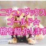 大人気のミニチュアダックス☆ゴールドの性格を紹介します!!