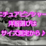 ミニチュアピンシャー☆服選びは正しいサイズ測定から始める