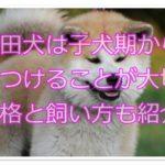 秋田犬は子犬期からしつけることが大切!!性格と飼い方も紹介