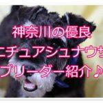 ミニチュアシュナウザー優良ブリーダー♪神奈川のオススメ☆