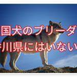 四国犬のブリーダー★香川県にはいない!?出張OK探しました♪