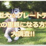 超大型犬☆グレートデーンの子犬の里親になる方法☆大調査!!