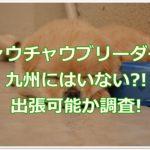 チャウチャウブリーダー☆九州にはいない?!出張可能か調査!!