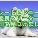 グレートピレニーズの優良ブリーダー☆四国で見つけました!!