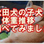 秋田犬の子犬の体重推移☆秋田犬の成犬はどれくらい大きいの