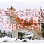 おっとりしてる秋田犬☆元猟犬でも性格はとても素直だった!!