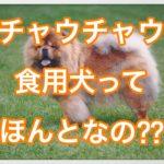 チャウチャウは食用犬ってほんと!?中国の犬肉祭りってなに??
