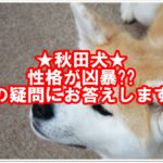 秋田犬の性格は凶暴だって言うのは本当??疑問を解決します!!